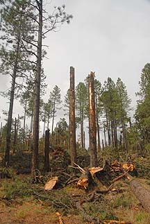 Mogollon Rim, October 21, 2010